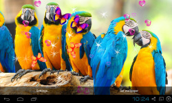 3D Cute Bird Live Wallpapers screenshot 4/4