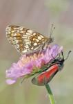 Butterfly HD Wallpaper screenshot 2/6