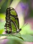 Butterfly HD Wallpaper screenshot 4/6