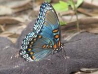 Butterfly HD Wallpaper screenshot 5/6