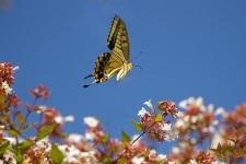 Butterfly HD Wallpaper screenshot 6/6