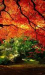 Best views of Nature Fall season Wallpaper screenshot 4/6