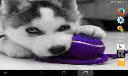Ultimate Puppies Live Wallpaper screenshot 1/6