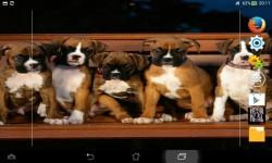 Ultimate Puppies Live Wallpaper screenshot 2/6