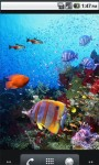3d Live Fish Wallpaper For Galaxy screenshot 4/6