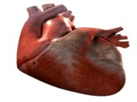 Heart Beating Live wallpape screenshot 6/6