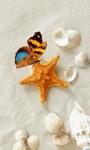Butterfly Shell Live Wallpaper screenshot 2/3