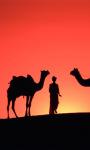 Camel Live Wallpaper screenshot 4/4