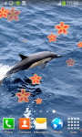 Dolphin Live Wallpapers Best screenshot 6/6
