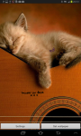 Cat Music Live Wallpaper screenshot 3/5