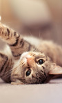 Cute Animals Images Wallpaper screenshot 4/6
