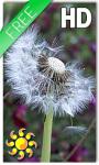 Dandelion Live Wallpaper HD Free screenshot 1/2