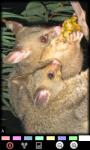 Funny Opossum : Loving Animals screenshot 6/6