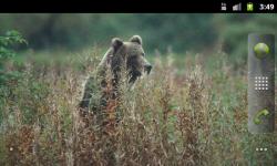 Bears Everywhere - Wallpaper Slideshow screenshot 4/4