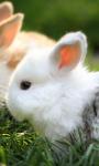 Cute Bunnies Live Wallpaper 2 screenshot 1/4
