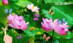 lotus flowers and butterflies afraid screenshot 2/2