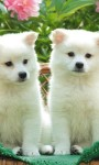 Cute Puppies Images Live Wallpaper screenshot 2/6