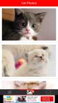 Cat Photos screenshot 2/6
