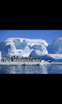 AMAZING PINGUIN IN ANTARCTICA HD WALLPAPER screenshot 1/6