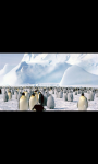 AMAZING PINGUIN IN ANTARCTICA HD WALLPAPER screenshot 4/6