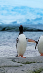 AMAZING PINGUIN IN ANTARCTICA HD WALLPAPER screenshot 5/6