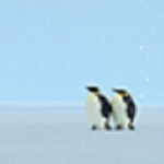 AMAZING PINGUIN IN ANTARCTICA HD WALLPAPER screenshot 6/6