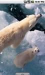 Cool Polar Bear Live Wallpaper screenshot 1/4