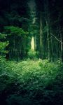 Beautiful Green Forest images Live Wallpaper screenshot 1/6