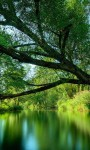 Beautiful Green Forest images Live Wallpaper screenshot 3/6