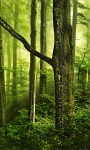 Beautiful Green Forest images Live Wallpaper screenshot 4/6