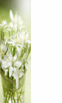 White lily close up Wallpaper HD screenshot 1/3