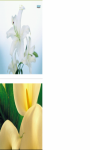 White lily close up Wallpaper HD screenshot 2/3