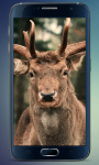 Herd of Deer Live Wallpaper screenshot 2/3