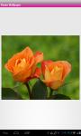 Rose Flower Wallpaper screenshot 3/6