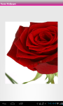 Rose Flower Wallpaper screenshot 4/6
