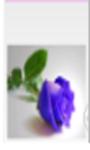 Rose Flower Wallpaper screenshot 5/6