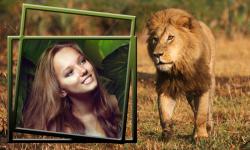 Lion Photo Frames Top screenshot 4/6