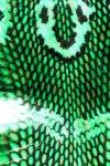 Green Snake Skin Live Wallpaper screenshot 2/2