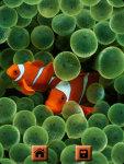 Ocean Life Fish Wallpapers screenshot 2/4