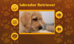 Learn More About Dog Breeds screenshot 3/6