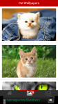 Free Cat Wallpapers screenshot 2/6