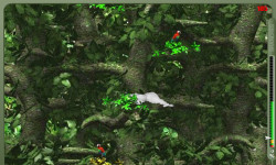 Crazy Jungle Game screenshot 3/4