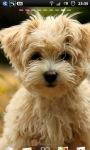 Cute Puppy dogs Live Wallpaper screenshot 1/6