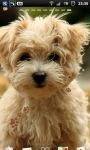 Cute Puppy dogs Live Wallpaper screenshot 2/6