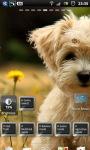 Cute Puppy dogs Live Wallpaper screenshot 5/6