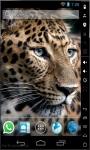 Leopard HD Live Wallpaper screenshot 1/2