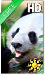 Panda Live Wallpaper HD screenshot 1/2