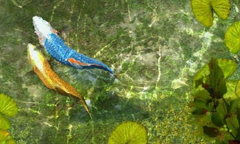 Koi Fish Live Wallpaper  WallpaperSafari