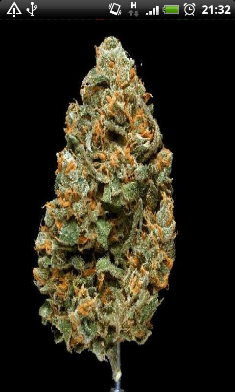 Free Weed Chronic In 3d Live Wallpaper Apk Download For