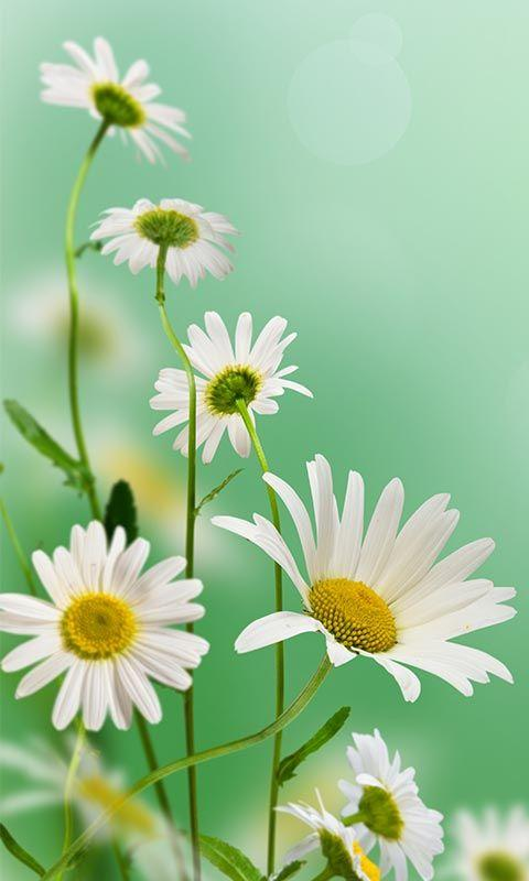 Free Beautiful Flowers images HD Wallpaper APK Download ... Uc Browser For Android Free Download